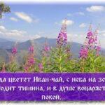 Иван-чай и его польза для организма человека