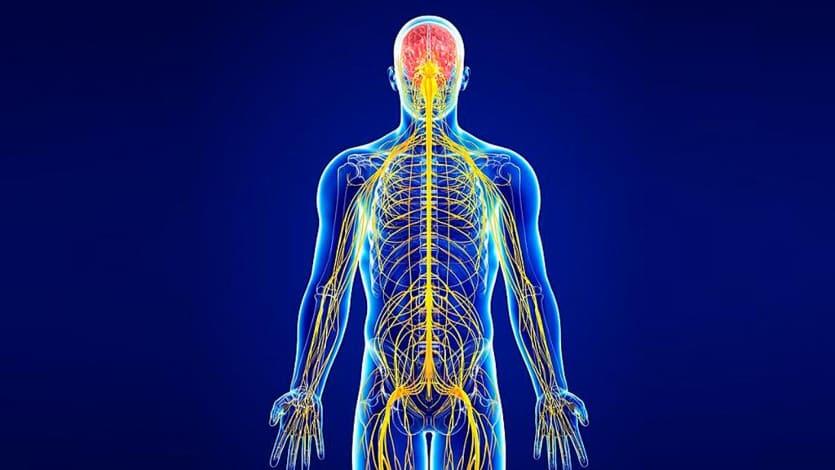 сеть нервной системы