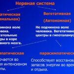 Центральная нервная система и её физиология