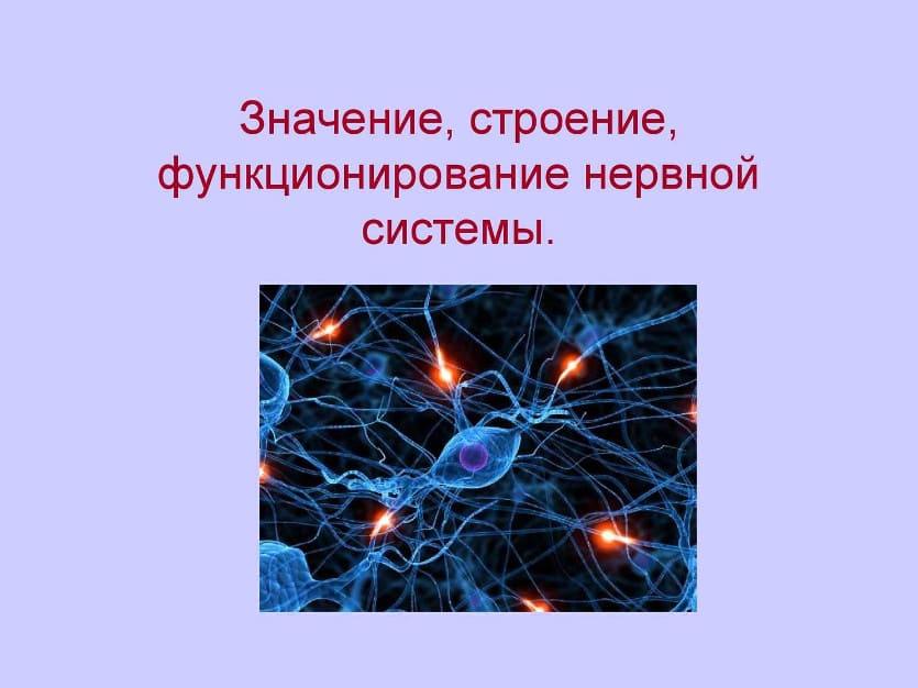 значение нервной системы