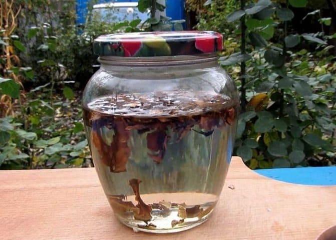 настойка на скорлупе грецкого ореха