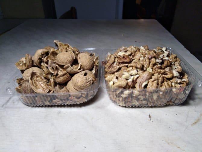 скорлупа и сердцевина грецкого ореха