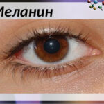 Для чего нужен меланин и какова его роль в организме человека